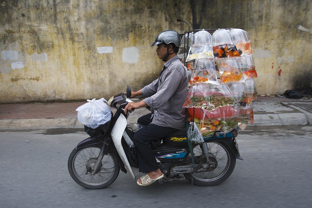 Bikes of Burden - Goldfish