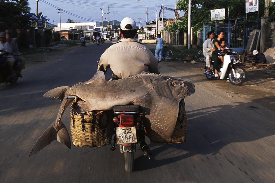 Bikes of Burden - Sandshark