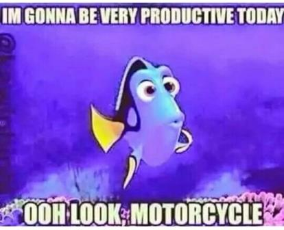 Dori motorcycle meme