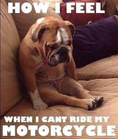 Top 10 Funny Biker Memes Motorbike Rider Memes Devitt